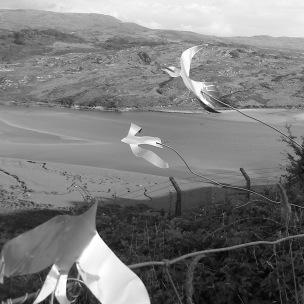 Gwaith Powdwr birds 3