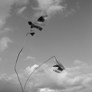 Gwaith Powdwr birds 7